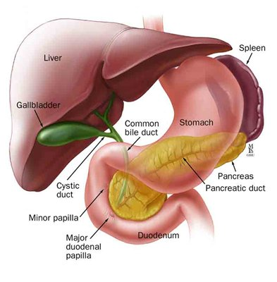 liver damage symptoms back pain