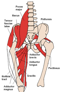 tensor fasciae latae muscle injury treatment