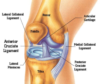 pain above the knee cap when bending