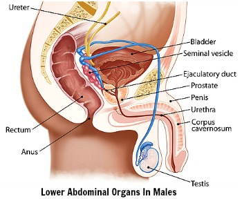 lower back and abdominal pain male