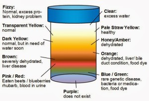 urine color meaning chart