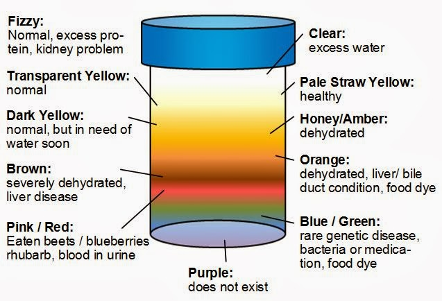 Urine color meaning red brown orange black purple etc for Pool chemical show urine