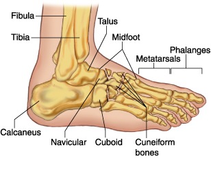 cuboid stress fracture image captions