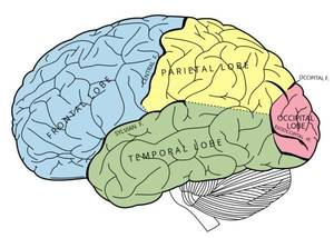 pain in the back side of the brain