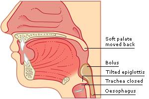 epiglottis function in digestive system