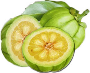 Garcinia cambogia fruit: how it looks like