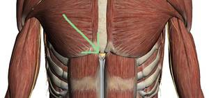 Causes Of Swollen Xiphoid Process