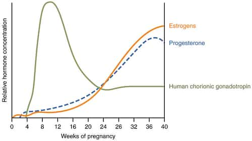Bad smelling gas during pregnancy caused by progesterone