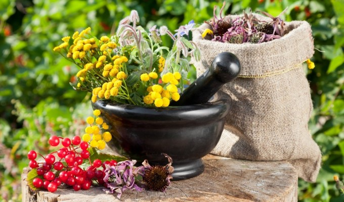 herbal treatment for kidney function