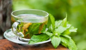Green tea to prevent vomiting during period