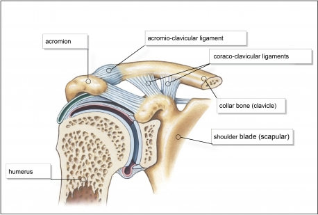 how to strengthen shoulder ligaments and tendons