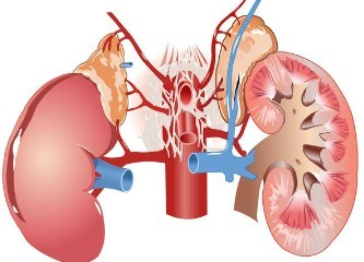 Creatinine and kidney