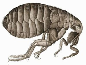 Fleas are typically found on pets like dogs and cats, but they can also be found on many other animals.