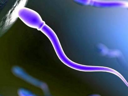 how much sperm does average male ejaculate