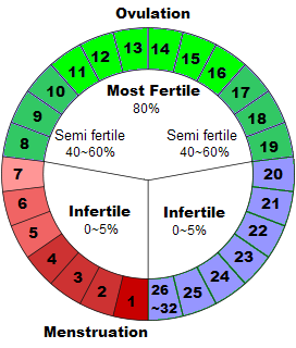 How to Determine the Most Fertile Days in Woman
