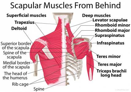 pain in right shoulder blade