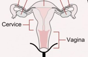 Vaginal pain during early pregnancy