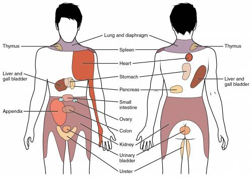 Flank Pain in Human