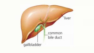what does the gallbladder look like
