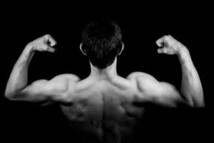 Muscles after supplemental