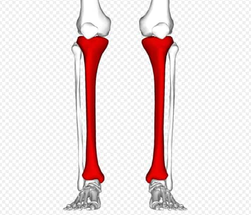 Your lower leg has four compartments—each one is made up of tissue, nerves, muscle, tendon, and blood vessels.