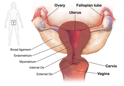 Pelvic inflammatory disease (PID) is an infection and inflammation of a woman's pelvic organs including the uterus (womb), Fallopian tubes (tubes), ovaries, and cervix.