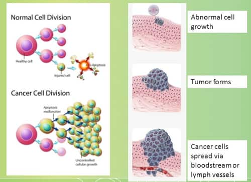What makes cancer cells so malevolently different from their normal predecessors?
