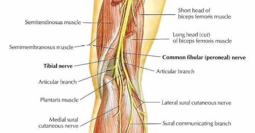 Not getting enough exercise or spending too much time sitting each day can damage the muscles, causing pain in your lower thigh as well.